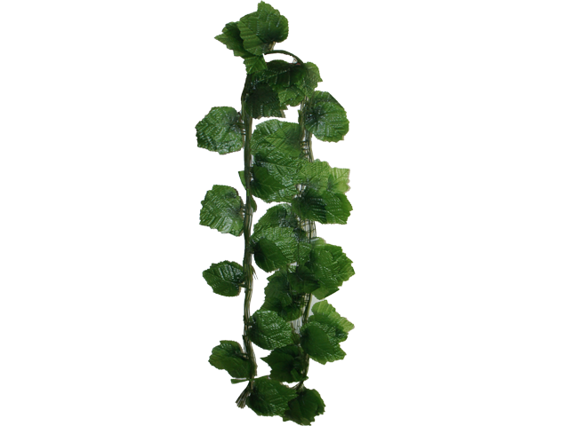 Group Of Hanging Vines Png By