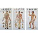 3-in-1 Acupuncture Chart -Chinese & English