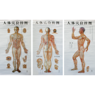 3-in-1 Acupuncture Chart -Chinese &amp; English