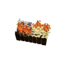 Flower Set W/Box -XSmall